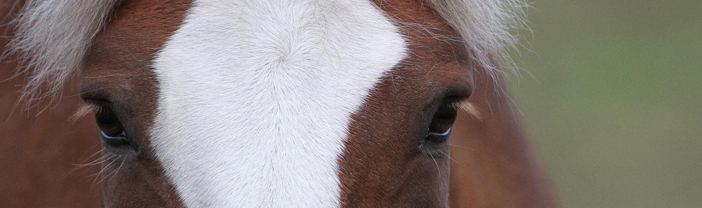 hevosen laiduntaminen syksyllä